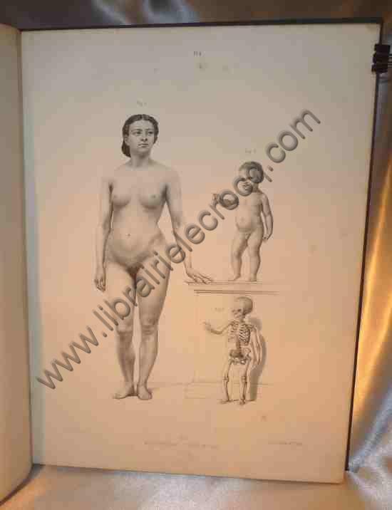FAU Le Docteur J., Atlas de l'anatomie des formes du...